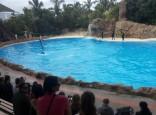 Delfinų programa