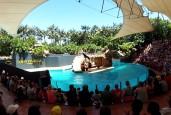 Jūros liūtų šou