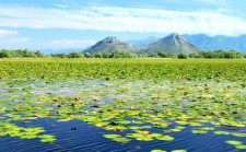 Apie 10 % ežero paviršiaus užima vandens augmenija