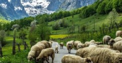 Kalnuose visuomet gyva gamta