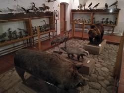 Didikų medžioklių trofėjai, tarp kurių paskutinioji Lietuvos meškutė