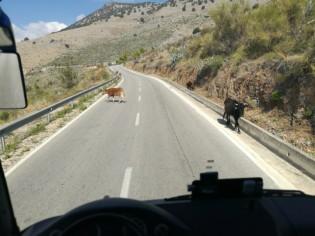 Ant kelio gyvūnai - dažnos akimirkos